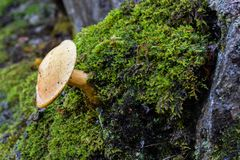 Κινηματογράφηση σε πρώτο πλάνο σε μια άγρια ανάπτυξη μανιταριών στην πλευρά ενός δέντρου στοκ εικόνες