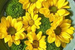 Κινηματογράφηση σε πρώτο πλάνο της ανθοδέσμης από τα κίτρινα και πράσινα chamomiles σε ένα κύπελλο με το νερό Λουλούδια που ανθίζ στοκ εικόνες με δικαίωμα ελεύθερης χρήσης