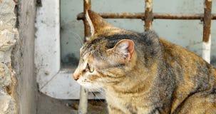 Κινηματογράφηση σε πρώτο πλάνο της γάτας έξω μπροστά από το πλέγμα σιδήρου απόθεμα βίντεο