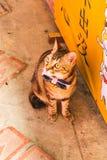 Κινηματογράφηση σε πρώτο πλάνο της ενιαίας χαριτωμένης γάτας μπροστά από το κατάστημα στο χωριό Jiufen Στοκ εικόνα με δικαίωμα ελεύθερης χρήσης