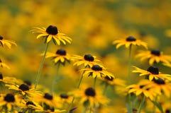 Κινηματογράφηση σε πρώτο πλάνο της κίτρινης άνθισης λουλουδιών στοκ εικόνα