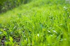 Κινηματογράφηση σε πρώτο πλάνο της πράσινης χλόης το καλοκαίρι στοκ εικόνα