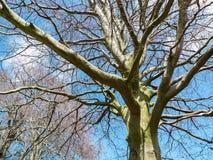 Κινηματογράφηση σε πρώτο πλάνο του γυμνού δέντρου με το μπλε υπόβαθρο Στοκ Εικόνες