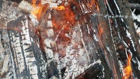 Κινηματογράφηση σε πρώτο πλάνο του καψίματος του καυσόξυλου στο οποίο χυμένο υγρό για το κάψιμο μιας πυρκαγιάς φιλμ μικρού μήκους