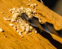 Κινηματογράφηση σε πρώτο πλάνο του κομματιού τρυπανιών με τα ξύλινα ξέσματα στο φως του ήλιου στοκ εικόνες