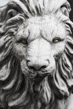 Κινηματογράφηση σε πρώτο πλάνο του λιονταριού προσώπου Στοκ εικόνα με δικαίωμα ελεύθερης χρήσης