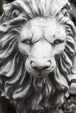 Κινηματογράφηση σε πρώτο πλάνο του λιονταριού Στοκ εικόνες με δικαίωμα ελεύθερης χρήσης