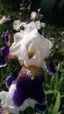 Κινηματογράφηση σε πρώτο πλάνο του λουλουδιού στοκ εικόνες με δικαίωμα ελεύθερης χρήσης