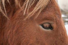 Κινηματογράφηση σε πρώτο πλάνο του ματιού ενός αλόγου στοκ εικόνα