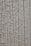 Κινηματογράφηση σε πρώτο πλάνο του ξεπερασμένου αποφλοιωμένου κωνοφόρου κούτσουρου στοκ εικόνα με δικαίωμα ελεύθερης χρήσης