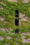 Κινηματογράφηση σε πρώτο πλάνο του τοίχου σπιτιών που καλύπτεται με τον κισσό Στοκ Εικόνες