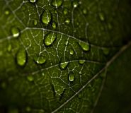 Κινηματογράφηση σε πρώτο πλάνο του φύλλου με τα σταγονίδια στοκ εικόνες