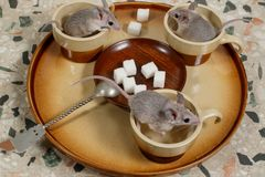 Κινηματογράφηση σε πρώτο πλάνο τρία ποντίκια σε έναν στρογγυλό δίσκο με τα κενά φλυτζάνια καφέ και το πιάτο της ζάχαρης στοκ εικόνα
