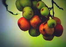 Κινηματογράφηση σε πρώτο πλάνο τροφίμων φρούτων δέντρων φύσης στοκ φωτογραφίες