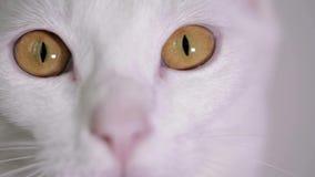 Κινηματογράφηση σε πρώτο πλάνο των άσπρων ματιών γατών ` s φιλμ μικρού μήκους