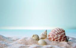 Κινηματογράφηση σε πρώτο πλάνο των θαλασσινών κοχυλιών στην άμμο Στοκ Εικόνες