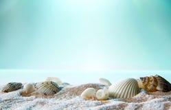 Κινηματογράφηση σε πρώτο πλάνο των θαλασσινών κοχυλιών στην άμμο Στοκ εικόνα με δικαίωμα ελεύθερης χρήσης
