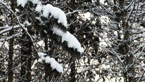 Κινηματογράφηση σε πρώτο πλάνο των κλάδων δέντρων στο χιόνι στο χειμερινό δάσος φιλμ μικρού μήκους