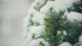 Κινηματογράφηση σε πρώτο πλάνο των κλάδων χριστουγεννιάτικων δέντρων με τη μακροεντολή χιονιού απόθεμα βίντεο