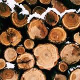 Κινηματογράφηση σε πρώτο πλάνο των κούτσουρων των δέντρων στη φύση πολύς τα κούτσουρα Στοκ Εικόνα