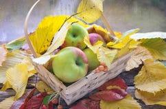 Κινηματογράφηση σε πρώτο πλάνο των κόκκινων μήλων με τα φύλλα φθινοπώρου στο ψάθινο καλάθι στο άσπρο κλίμα Στοκ Εικόνες
