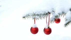 Κινηματογράφηση σε πρώτο πλάνο των κόκκινων σφαιρών μπιχλιμπιδιών Χριστουγέννων που κρεμούν στους χιονισμένους κλάδους δέντρων πε απόθεμα βίντεο