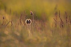 Κινηματογράφηση σε πρώτο πλάνο των λουλουδιών στο φως πρωινού Στοκ Εικόνα