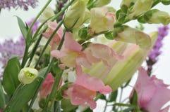 Κινηματογράφηση σε πρώτο πλάνο των λουλουδιών στοκ φωτογραφίες με δικαίωμα ελεύθερης χρήσης
