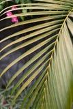 Κινηματογράφηση σε πρώτο πλάνο των πράσινων φύλλων φοινικών στο γκρίζο κατασκευασμένο υπόβαθρο τοίχων Στοκ εικόνες με δικαίωμα ελεύθερης χρήσης
