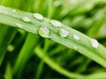 Κινηματογράφηση σε πρώτο πλάνο των πτώσεων νερού στα φύλλα κατά τη διάρκεια της περιόδου βροχών στοκ εικόνα