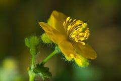 Κινηματογράφηση σε πρώτο πλάνο των χρυσών λουλουδιών στοκ φωτογραφία με δικαίωμα ελεύθερης χρήσης