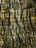 Κινηματογράφηση σε πρώτο πλάνο φλοιών δέντρων με την υψηλή επίδραση συμβάσεων στοκ εικόνα