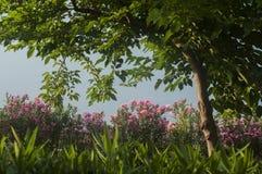 Κινηματογράφηση σε πρώτο πλάνο φρακτών κήπων εξοχικών σπιτιών Στοκ Εικόνα