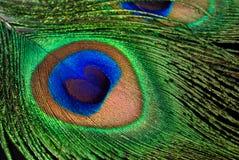 Κινηματογράφηση σε πρώτο πλάνο φτερών Peacock Στοκ εικόνα με δικαίωμα ελεύθερης χρήσης