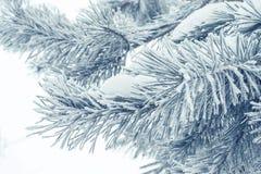 Κινηματογράφηση σε πρώτο πλάνο χειμερινών βελόνων Στοκ εικόνες με δικαίωμα ελεύθερης χρήσης