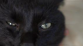 Κινηματογράφηση σε πρώτο πλάνο, 4k, πράσινα μάτια μιας μαύρης γάτας απόθεμα βίντεο