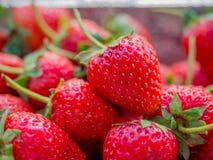 Κινηματογράφηση σε πρώτο πλάνο strewberry στοκ εικόνες