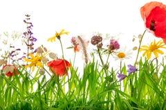 Κινηματογράφηση σε πρώτο πλάνο, wildflower λιβάδι με τις παπαρούνες, arnica Μοντάνα και marg Στοκ εικόνες με δικαίωμα ελεύθερης χρήσης