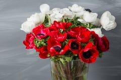 Κινηματογράφηση σε πρώτο πλάνο άσπρες και κόκκινες παπαρούνες anemones στο βάζο Πολλά λουλούδια - γκρίζο υπόβαθρο χειμερινό λουλο Στοκ Φωτογραφία