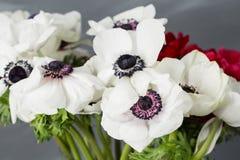 Κινηματογράφηση σε πρώτο πλάνο άσπρες και κόκκινες παπαρούνες anemones στο βάζο Πολλά λουλούδια - γκρίζο υπόβαθρο χειμερινό λουλο Στοκ Φωτογραφίες