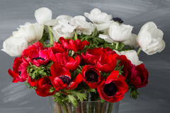 Κινηματογράφηση σε πρώτο πλάνο άσπρες και κόκκινες παπαρούνες anemones στο βάζο Πολλά λουλούδια - γκρίζο υπόβαθρο χειμερινό λουλο Στοκ φωτογραφία με δικαίωμα ελεύθερης χρήσης