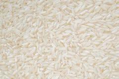 Κινηματογράφηση σε πρώτο πλάνο άσπρου ρυζιού Στοκ εικόνα με δικαίωμα ελεύθερης χρήσης