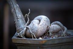 Κινηματογράφηση σε πρώτο πλάνο δέντρων μπονσάι Στοκ φωτογραφίες με δικαίωμα ελεύθερης χρήσης