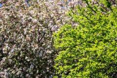 Κινηματογράφηση σε πρώτο πλάνο δέντρων Στοκ φωτογραφίες με δικαίωμα ελεύθερης χρήσης