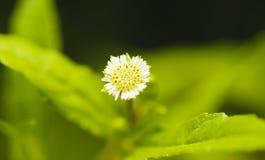 Κινηματογράφηση σε πρώτο πλάνο λίγου λουλουδιού χλόης Στοκ Εικόνα