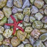 Κινηματογράφηση σε πρώτο πλάνο αστεριών Ερυθρών Θαλασσών Στοκ Φωτογραφία