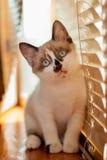 Κινηματογράφηση σε πρώτο πλάνο γατακιών στο εσωτερικό στοκ φωτογραφίες με δικαίωμα ελεύθερης χρήσης