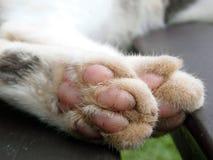 Κινηματογράφηση σε πρώτο πλάνο γατών ποδιών Στοκ Φωτογραφία