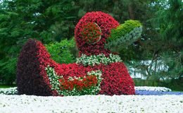Κινηματογράφηση σε πρώτο πλάνο ενός αριθμού των παπιών που γίνεται από τα λουλούδια Στοκ Εικόνες