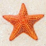 Κινηματογράφηση σε πρώτο πλάνο ενός αστερία (αστέρι θάλασσας) Στοκ εικόνα με δικαίωμα ελεύθερης χρήσης